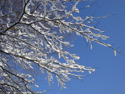 snowpocalypse part 2