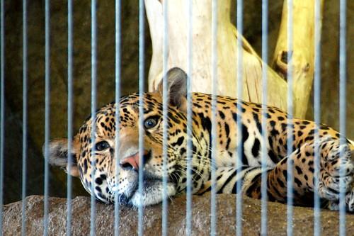 zoo 126
