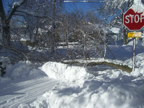 Pile of snow plowed in front of large branch blocking road