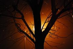 tree (**photo-starling**) Tags: street uk light england mist tree london rain fog night nikon streetlight outdoor walthamstow d40x