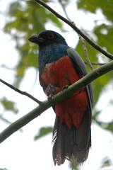 DSC_8842.NEF (Bird Brian) Tags: peru amazonbasin tambopataresearchcentre