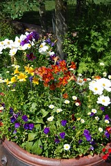 Bright Flowers (f towery) Tags: starsaward vail2009