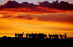 Sunset Llamas (Michael Bollino) Tags: travel sunset sky southamerica clouds outside jeep earth vibrant altitude magic bolivia andes llamas altiplano salardeuyuni blueribbonwinner southwestbolivia explorefp michaelbollino
