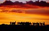 Sunset Llamas (Michael Bollino) Tags: travel sunset sky southamerica clouds outside jeep earth vibrant altitude magic bolivia andes llamas altiplano salardeuyuni blueribbonwinner southwestbolivia explorefp michaelbollino