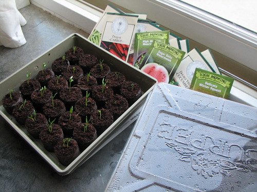 seedlings and seeds