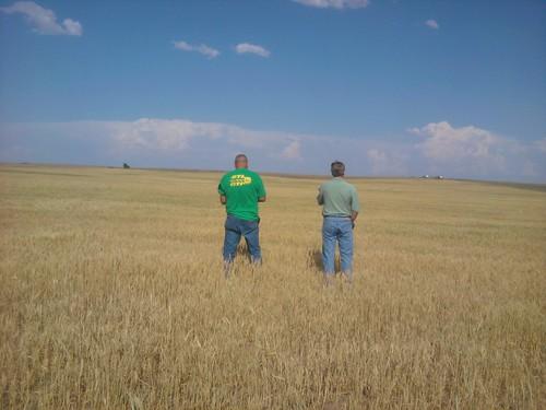 Cell phone photo: Okla. wheat