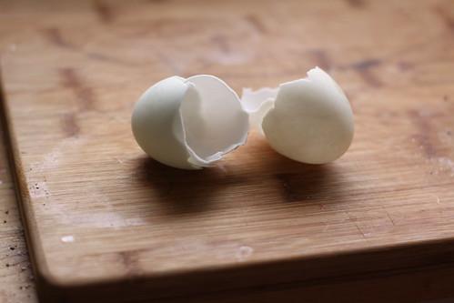 Duck shells