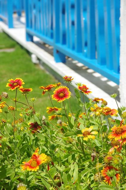 再訪菊島之今年夏天很色彩