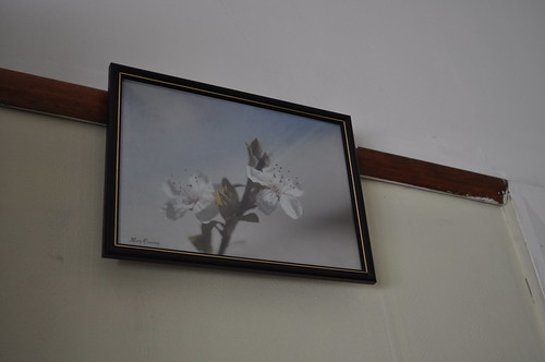 blossom photo 869