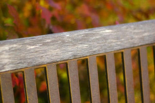 279:365生锈的长凳