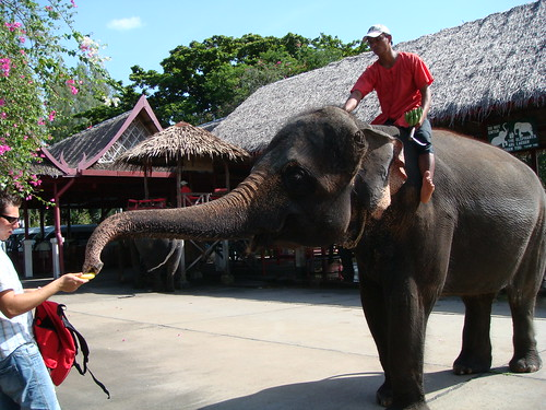 Thailand: Elephant Show and The Rose Garden @ Song About Jen