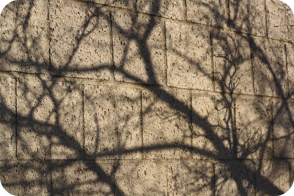 Branch Shadows.