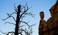 Dead tree and balanced rock (kmanohar) Tags: travel landscape death scenery colorado roadtrip erosion deadtree journey despair roadtripusa nationalparkservice desolate deadwood nationalmonument americanwest grandjunction fruita balancedrock coloradoroadtrip americansouthwest endoflife coloradonationalmonument civilianconservationcorps coloradoplateau getaways thewest scenicdrive giveup coloradoscenery westerncolorado westernusa drywood drybranches aridregion coloradoutahborder grandjunctioncolorado struggleforlife semidesert mesacounty rimrockdrive laramideorogeny highplateau uncompahgreplateau fruitacolorado americanroadtrip coloradophotography battleforsurvival beautifulcolorado desertdeath rockerosion westernamerica sceniccolorado mesacountycolorado drycolorado scenicroadtrip dryusa dryplateau americansouthwestroadtrip semiaridregion aridcolorado americanwestlandscape aridusa coloradodeadtree coloradoerosion westernerosion coloradoplateauerosion effectsoferosion coloradoplateaurocks coloradobalancedrocks coloradonationalmonumentbalancedrock desertdespair coloradonationalmonumentphotography