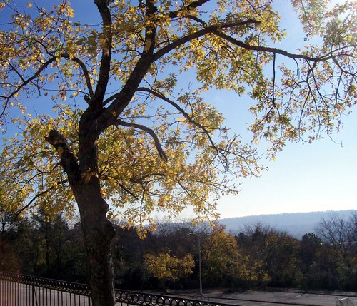 Tree overlooking Shades Valley and Homewood