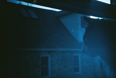 Blue Kitty (LindySlav) Tags: madison madisonwi wi holga135