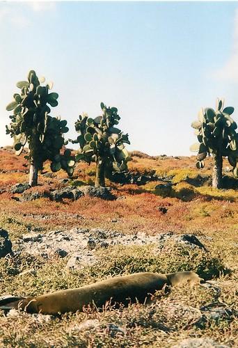 Galapagos- South Plaza (6)