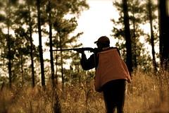 gun hunting shotgun quail