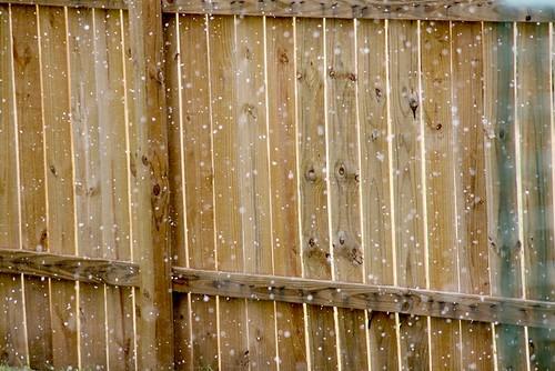 Snow in Austin 2009