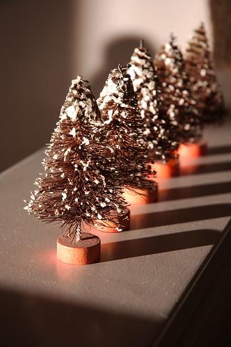 5 christmas trees