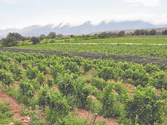 Tarija: Los destinos imprescindibles en la tierra del vino de altura