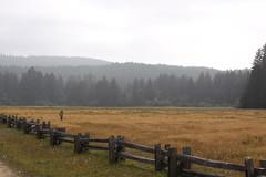 The line of redwood forests (eklipz09) Tags: redwoodnationalpark ferncanyon