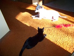 Q&J in a sunbeam