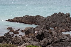 Seal Colony at Cape Palliser