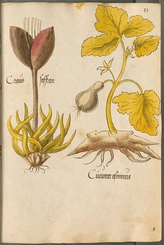 Arzneipflanzenbuch, 1525 f