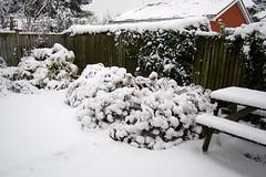 Snow January 2010 080