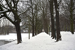 Winter (Pieter Musterd) Tags: trees winter snow holland tree canon bomen raw sneeuw nederland thenetherlands denhaag boom langevijverberg 40d canoneos40d pietermusterd thehague