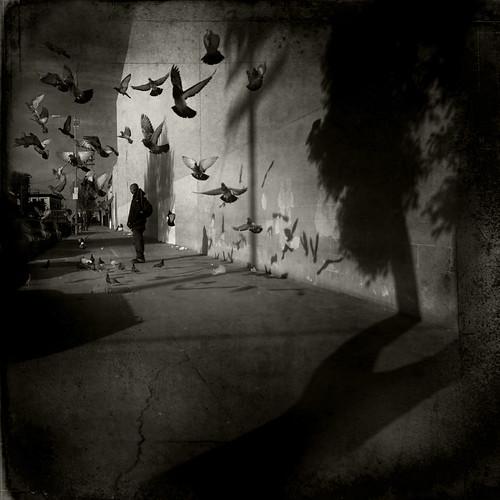 Haiti Appeal: Pigeons & Shadows.