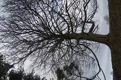 DSC00357 (Sarah Bailey) Tags: park dyrham 170110
