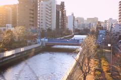 (yokko..) Tags: park sunset building japan zeiss canon river tokyo  kiba planar