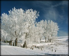 ...a winter wonderland at Frog Gap (westrock-bob) Tags: county blue winter sky white snow canada grass clouds fence three wooden amazing wire rust frost awesome gap bob vivid radiation ab canadian frog hills bleu alberta dreamy barb posts campground awe wonderland puffy barbwire barbed allrightsreserved westrock canadien 2010 hoar amaze cuthill kneehill westrockbob bobcuthillphotographygmailcom