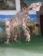 Giant Ground sloth (Megatherium sp.) MEGATERIO GIGANTE ~ Original = (2601 x 3412) (turdusprosopis) Tags: megatherium megaterio groundsloth extinctanimals pilosa preguias xenarthra perezosos megatheriumamericanum mammalsofuruguay faunaargentina extinctmammals faunadeargentina animalsofargentina animalesdelaargentina mamferosargentinos mamferosdeargentina animalesargentinos animalesdeargentina animalesdeuruguay animalsofuruguay faunauruguaya faunadeluruguay faunadeuruguay mamferosdeuruguay mamferosdeluruguay mamferosuruguayos animalesuruguayos animalesdeluruguay mammalsofargentina preguiagigante faunaofuruguay megatheriidae mammalsofsouthamerica uruguayananimals uruguayanmammals uruguayanfauna megateriogigante perezosoterrestre perezososterrestres megatrios megatriogigante megatheriumamericanumcuvier1796 megaterios