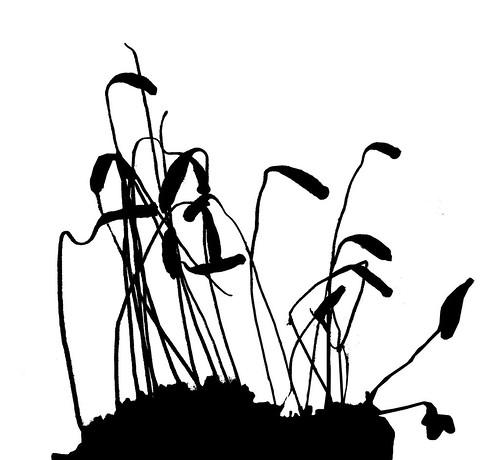 spores silhouette