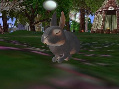 I got a little bunny