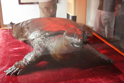 Turtle in glass