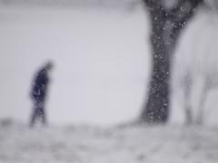 Umilt (Lumase) Tags: blue snow man tree topf25 snowflakes topf50 poetry poem human trunk poesia snowfall leaning soe lean whiteness umilt artlibre artlibres lumapo
