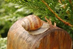 Snail (roberto.valente) Tags: snail lumaca anawesomeshot