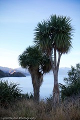 Lake Hawea (kiwigran) Tags: newzealand canon evening centralotago iconic hawea cabbagetrees lakehawea otw