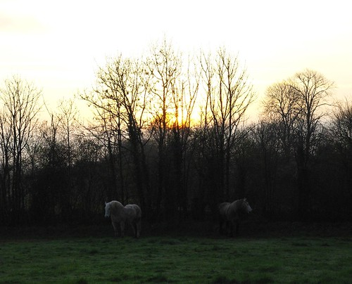 Chevaux à l'aube / Horses in the morn