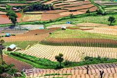 Vattavada (Vinod Kumar M.) Tags: travel india green nature landscape village kerala hills vino vinod munnar vattavada vinodkumar vinodkumarm vinodkumarmphotography