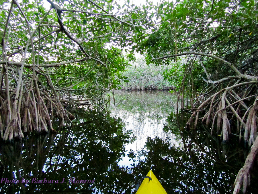 Everglades National Park-Kayaking (3 of 19)