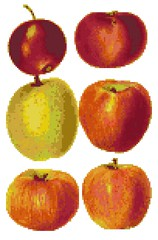 apples (nichestitch) Tags: red orange brown apple thread yellow shop fruit design crossstitch pattern embroidery craft health fabric needle pdf etsy cloth fiberart homedecor aida floss artfire