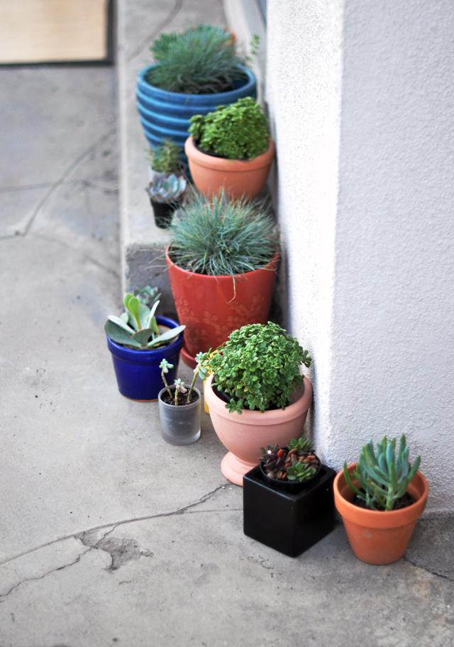 little potted succulents