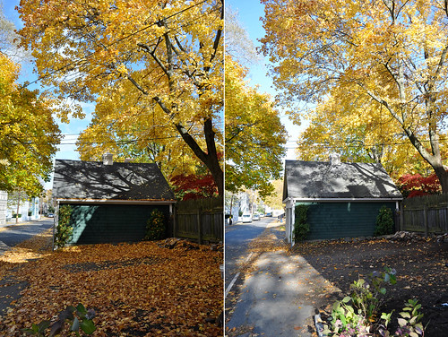Mulching Leaves: Before & After