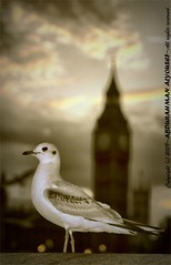 BIG BIN (ABDULRAHMAN ALYUOSEF. 2012) Tags: london canon nikon flickr d70 nikond70 2010 d300 canond300 abdulrahman alyousef abdulrahmanalyousef mrd7d7