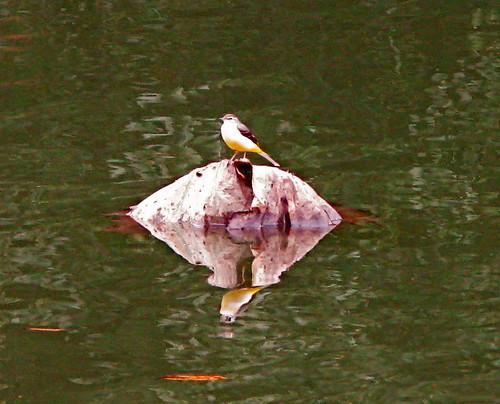 No bird is an island ...