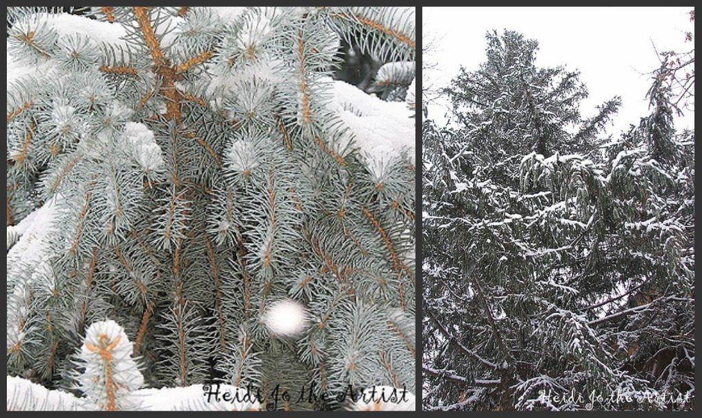 Pine Tree Collage